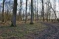 Aus vielen Fußabdrücken wird ein Weg,Hambacher Forst,NRW.jpg