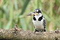 Austin Roberts Bird Sanctuary-018.jpg