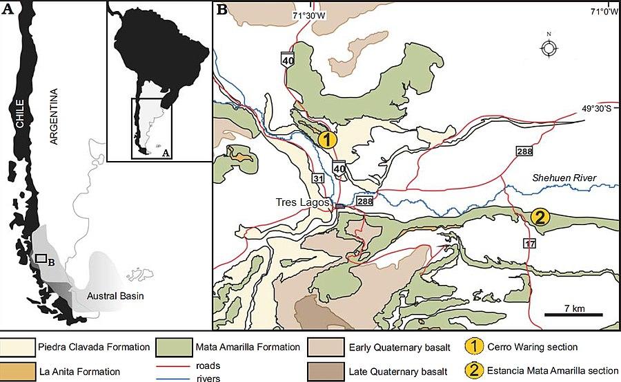 Mata Amarilla Formation
