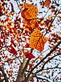 Autumn 2015 (127915755).jpeg