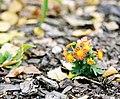 Autumn Flowers (233881353).jpeg
