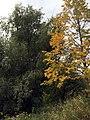 Autumn Trees (15990220193).jpg