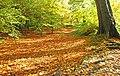 Autumn at Minnowburn, 2008 (5) - geograph.org.uk - 1028332.jpg