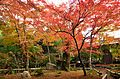 Autumn foliage 2012 (8253634758).jpg