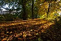 Autumn in the Park IMG 7776 - panoramio.jpg
