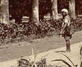 Avenue of palms at the Botanical Gardens, Calcutta in the 1890s (04).jpg