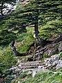 Azro nethour - Djurdjura national part.jpg
