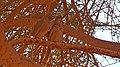 Babblers, Ardon Creekת Ramon Makhtesh, Negev, Israel זנבנים, נחל ארדון, מכתש רמון, הר הנגב - panoramio.jpg