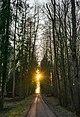 Bad Rappenau - Einsiedel - Hauptweg - Blick nach Westen mit Sonnenuntergang.JPG