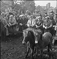 Bampton Fair- Pony, Sheep and Cattle Sales in the Village of Bampton, Devon, England, UK, October 1943 D16896.jpg