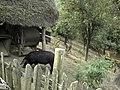 Banat, Gärnik-Rovensko - panoramio (15).jpg