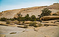 Barker Dam Nature Trail (15400740673).jpg