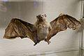 Bat (6915986509).jpg