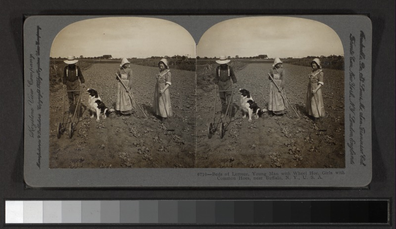 File:Beds of lettuce, young man with wheel hoe, girls with common hoes, near Buffalo, N.Y., U.S.A (NYPL b11707957-G91F104 013F).tiff