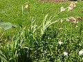 Beige Flowers.jpg