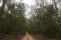Benandarah NSW 2536, Australia - panoramio (50).jpg