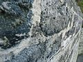 Bermuda (UK) Number 178 limestone used as building material for walls.jpg