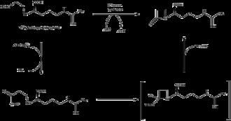 Clavulanic acid - Image: Beta lactam synthetase mechanism