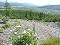 Bilibinsky District, Chukotka Autonomous Okrug, Russia - panoramio (83).jpg