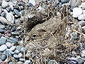 Bird nest beach Rhodos 03.JPG