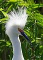 Birds florida gatorland (17118152903).jpg