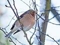 Birds in the garden (16138122192).jpg