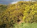 Blackburn, UK - panoramio (28).jpg