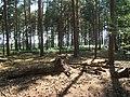 Blackheath Forest near Albury - geograph.org.uk - 188423.jpg