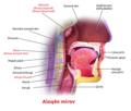 Blausen 0861 Tonsils&Throat Anatomy2 ku.png