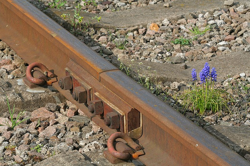 File:Bluebell rail (3439380930).jpg