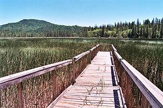 Boggs Lake Ecological Reserve - Boggs Lake boardwalk