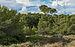 Bois des Aresquiers, Vic-la-Gardiole, Hérault 01.jpg
