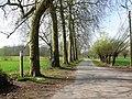 Bornem Boeterbloemenlaan Opgaande bomenrij van platanen (3) - 193400 - onroerenderfgoed.jpg