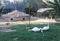 Borujerd Zoo 10.jpg
