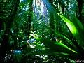 Bosque en la finca Susun, Comunidad San Martin Yaoya, Prinzapolka, RAAN, Nic. - panoramio.jpg