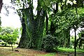 Botanic garden limbe10.jpg
