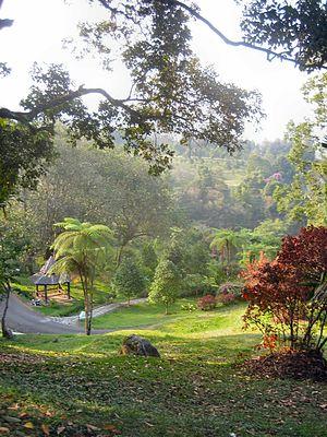 Cibodas Botanical Garden - Image: Botanical garden Cibodas Indonesia 6