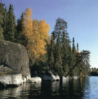 Western Great Lakes forests ecoregion defined by the World Wildlife Fund