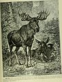 Brehm's Life of animals - a complete natural history for popular home instruction and for the use of schools. Mammalia (1896) (19791190804).jpg