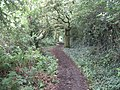 Bridleway between Willaston Road and Mill Lane - geograph.org.uk - 1415510.jpg