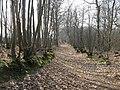 Bridleway in Fittleworth Wood - geograph.org.uk - 1209824.jpg
