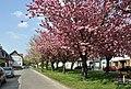 Brugge Zwankendammestraat R01.jpg
