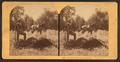 Buffalo hunting in Montana, by Bonine, R. (Robert K.).png