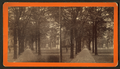 Bull Street, Savannah, Ga, from Robert N. Dennis collection of stereoscopic views 2.png