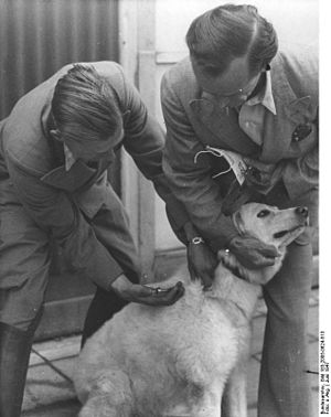 Vaccination of dogs - Dog vaccination against canine distemper