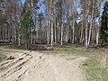 Burtnieku pagasts, Latvia - panoramio (1).jpg
