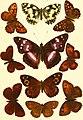 Butterflies and moths (British) (1894) (20517563651).jpg