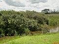 Córrego do Lambari na Rodovia Brigadeiro Faria Lima - SP-326 - panoramio (1).jpg