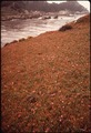 CALIFORNIA-POINT LOBOS RESERVE - NARA - 543196.tif