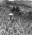 COLLECTIE TROPENMUSEUM Vogelverschrikker in een rijstveld in de omgeving van Ciwidey TMnr 20000178.jpg